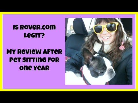 Is Rover Legit? My review after pet sitting for 1 year on Rover