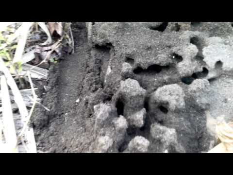 Incredible ant colony