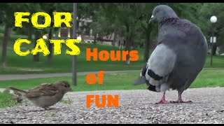 视频猫 - 鸟类,松鼠,兔,花栗鼠,鸽子,
