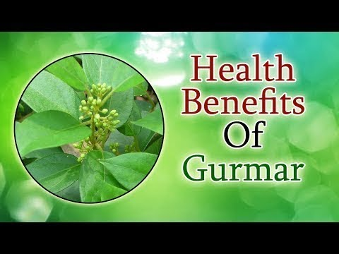 Cure Diabetes With Gymnema Sylvestre (Gurmar) Health Benefits Of Gurmar