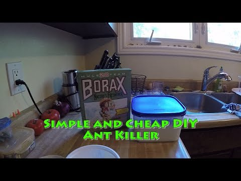 Simple and Cheap DIY Ant Killer