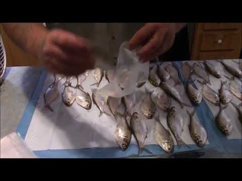 Tips for Freezing Bait Fish