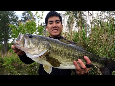 Fishing for TOADS in Alabama - Personal Best Bass!!! (ft. BamaBass)