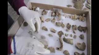 Gli scheletri di Ferento (VT)
