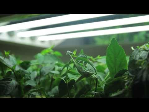 How T5 Grow Lights fit your growing demand and saving power | An overview by Greens Hydroponics
