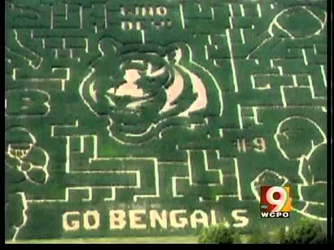 Reds corn maze to debut Saturday