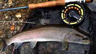 Catching Nice Hucho With Fly Rod|Fly Fishing For Hucho/Huchen|Fly Fishing Croatia-Ribolov mladice