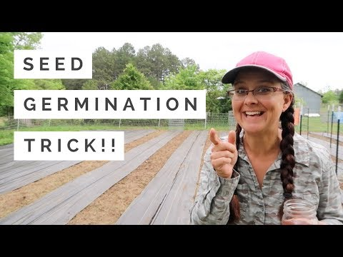 BOOST Your Germination Rate...A Simple Trick!!!
