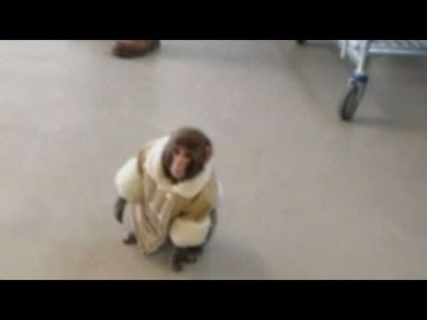 Ikea Monkey home video shows ex-owner and animal brushing teeth in Canada