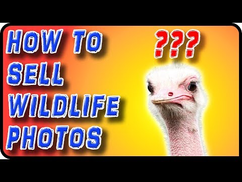 How to Sell Wildlife Photos - Stock Photography Ep. 28