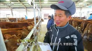 Download 한국기행 - Korea travel 국밥기행 1부 수구레의 추억 #001 Video