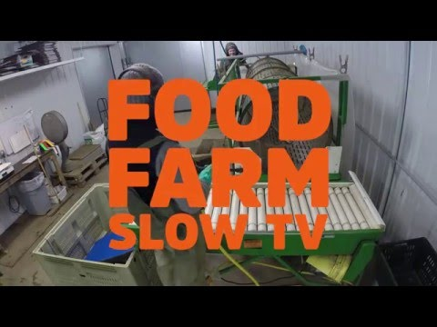 Carrot Washing - Food Farm Slow TV - Extra Slow Edition