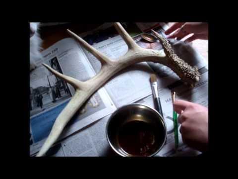 Deer Antler Stain With Coffee & Tea