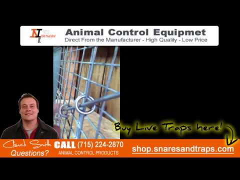 How to trap squirrels   Live Traps