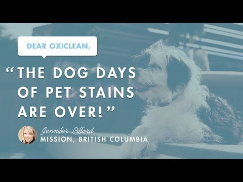 Dear OxiClean: The Dog Days of Pet Stains Are Over!