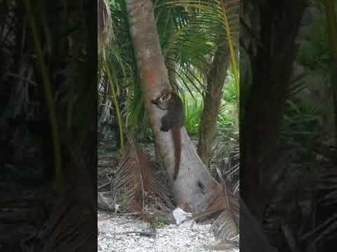 Grand Sirenis hotel Mexico jungle path animals