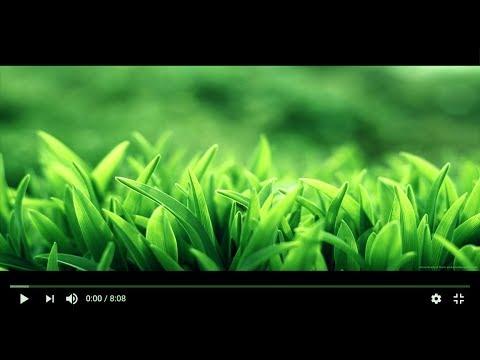 YouTube HTML5 Player Seek Bar not Hiding in Full Screen [Proper Fix]