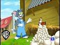 Download El show de Tom y jerry | Huevos y Más Huevos | en español ( Parte 1/2 ) MP3,3GP,MP4