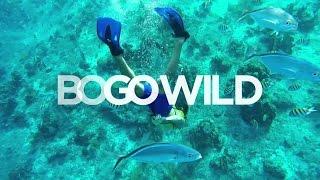 Royal Caribbean BOGO Wild TV commercial