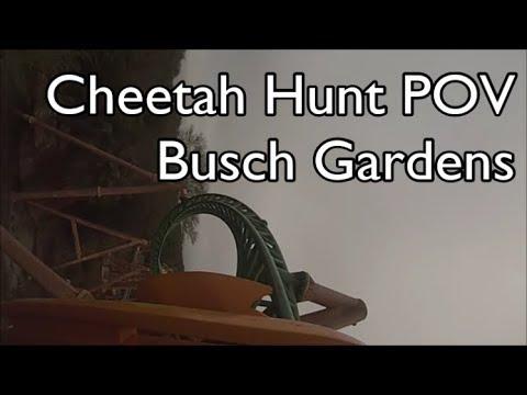 Cheetah Hunt POV - Busch Gardens - Tampa, FL