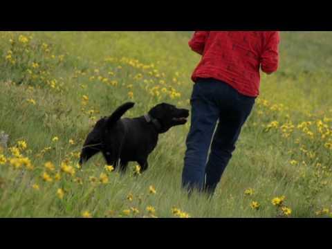 LandLeader TV - Episode 9 - Timber, Cattle and Plantations