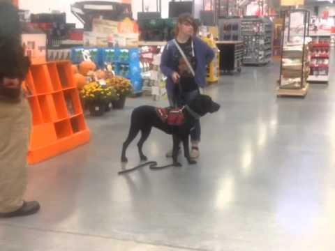 Autism Service Dog Training