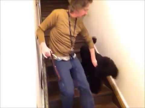 Dog Training - Dog submissive pees