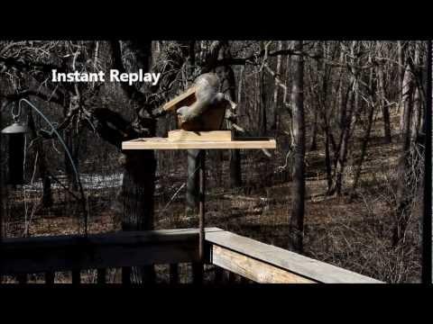 Squirrel Wars - Electric fence bird feeder