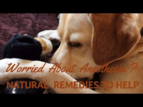 Natural Remedies After Anesthetic and Surgery