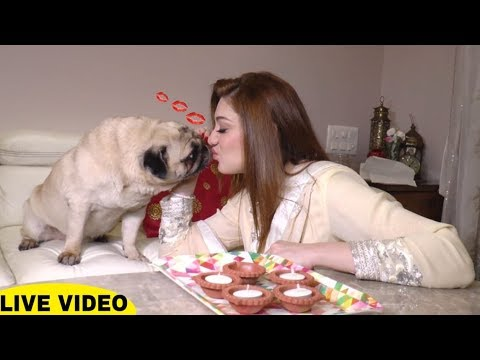 Xxx Mp4 TV Actress Shefali Jariwala Celebrate Diwali At Home Baby Come Naa Comedy Web Series 3gp Sex