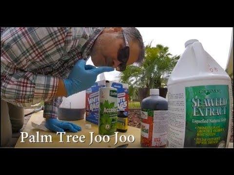 Palm Tree Rescue | Humic Acid and Sea Kelp Fert Fun