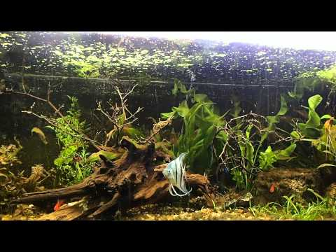driftwood in the aquarium FINDING CURING AND ADDING
