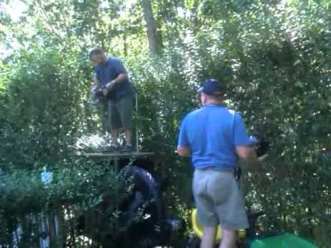 How to trim tall hedges like a red neck