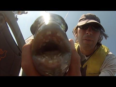 Sheepshead Fishing (How I catch)