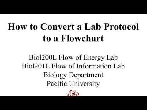 How to Convert a Lab Protocol to a Flowchart