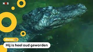 'Alligator van Hitler' is doodgegaan