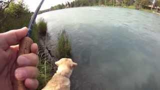 37 Minute Limit - Kenai River Sockeye Salmon - July 16, 2013