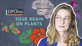 Your brain on plants: why gardens are good for you