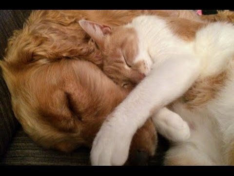 PET THERAPY - Sleep Music For Cats and Dogs ♥♥♥ Soothes and Relieves Stress and Anxiety