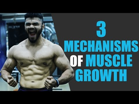 The 3 Mechanisms of Muscle Growth   And how to use them for MAX GAINS
