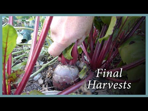 Winter Garden: Harvesting, Saving Seeds, Beautiful Weeds
