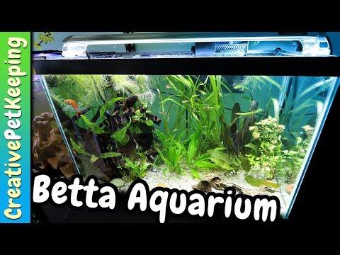 Re-Planting 20 Gallon Betta Community Tank | Aquarium Co-Op UNBOXING