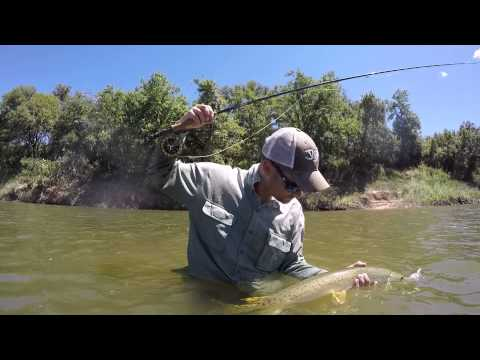Long nosed gar flyfishing hookless nylon rope