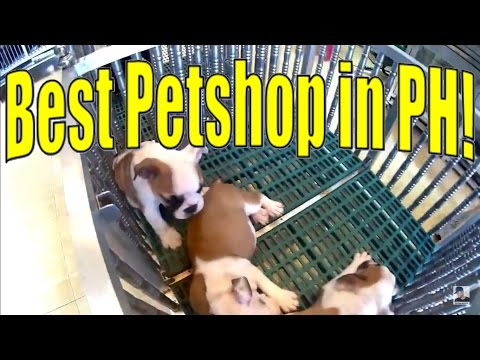 👑 🔴 CARTIMAR BEST PET SHOPS TOUR FISH DOG MARKET PHILIPPINES