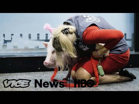 It's Surprisingly Easy To Qualify For A Therapy Pet (HBO)