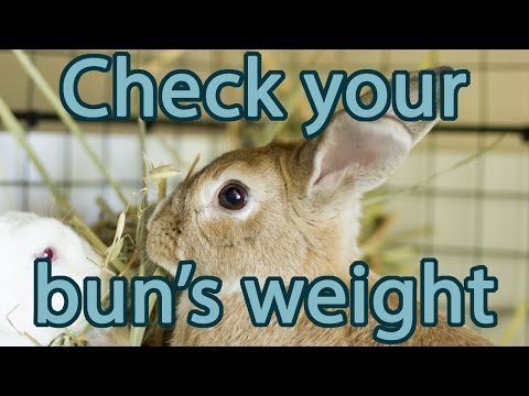 Is Your Rabbit the Right Weight?   Bunny Basics