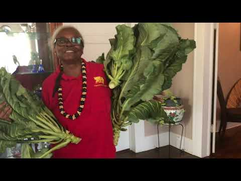 FARMERS MARKETS - SELLING TAMALES AND HOW TO PICK AND PREPARE COLLARD GREENS FOR COOKING