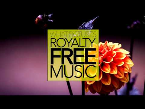 R&B/Soul Music [No Copyright & Royalty Free] Positive Happy | FLOW (Sting)