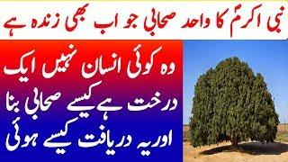 Nabi Akram SAW ka Sahabai Darakht   The Blessed Tree History   Studio One