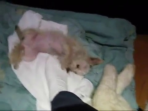 Beautiful story about a dog being rescued from Euthanasia! (Rescue Dog) PETA SAVE THE ANIMALS!